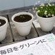Japan, the newspaper that becomes a plant (again)